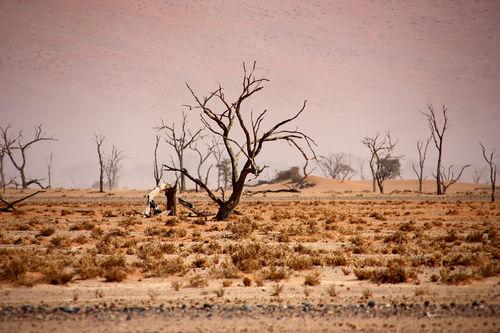 2016-namibia-341