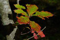 Herbstblätter von atelier-kristen