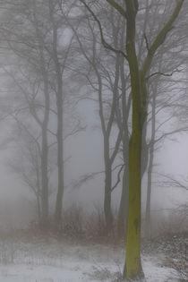 'Winterwald 2' von Bernhard Kaiser