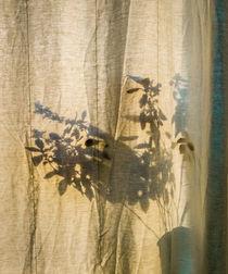Basil-camouflage 2 by Erik Mugira