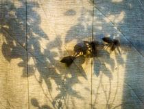 Basil-camouflage 3 by Erik Mugira