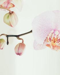 Orchid von Andrei Grigorev