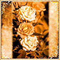 Vintage Roses von Sandra  Vollmann