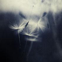 Dark whispers von Priska  Wettstein