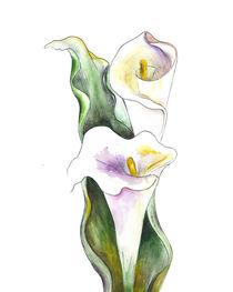 White Cala Lily von mikart