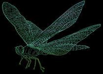 Dragonfly von David Bushell