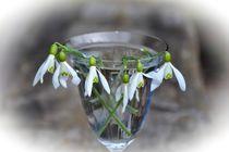 Schneeglöckchen im Glas von Claudia Evans