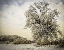 'Winterweide' von Christine Horn