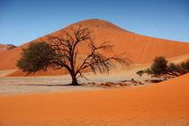 NAMIBIA ... Namib Desert Tree II von meleah