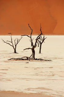 NAMIBIA ... Deadvlei II by meleah