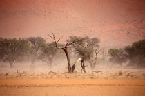 NAMIBIA ... through the storm I von meleah