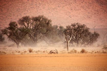 NAMIBIA ... through the storm II von meleah
