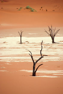 NAMIBIA ... Deadvlei III by meleah