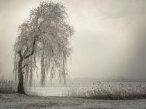 'Trauerweide am Bodensee II' von Christine Horn