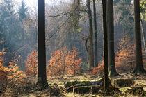 Der Wald an der Waldburghöhe von Ronald Nickel