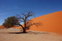 NAMIBIA ... Namib Desert Tree III von meleah