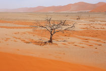 NAMIBIA ... Namib Desert Tree V von meleah