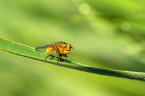 Insektenmakro von Bernhard Kaiser