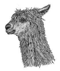 Alpaca by Condor Artworks