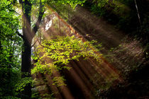 Im Uttewalder Grund by sternbild
