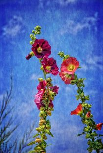 Blüten by Claudia Evans