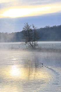 Nebel und Sonnenlicht von Bernhard Kaiser