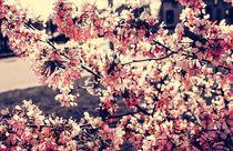 Frühlingsfantasie von Heidi Piirto
