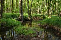 Ein Bach im Wald von Claudia Evans