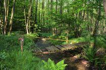 Die alte Holzbrücke von Claudia Evans
