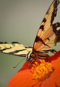Butterfly 2 by Tim Seward