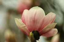 Blütenzauber von Heinz E. Hornecker