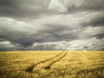 'Getreidefeld mit Regenwolken' by Christine Horn
