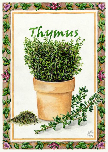 Thymus-dot-keukenposter