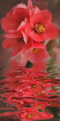 'Flower Water - Quittenblütenwasser' von Chris Berger
