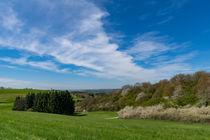 Landschaft mit blühendem Waldrand von Ronald Nickel
