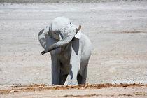 NAMIBIA ... Elephant fun I von meleah