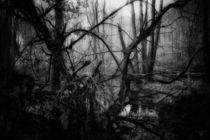 im moor by micha gruenberg