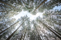 looking up in the forest von hannes cmarits