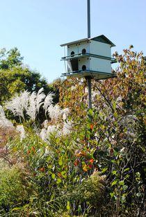 Bird House, 2016