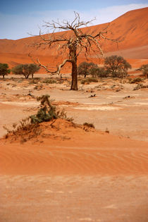 NAMIBIA ... Namib Desert Tree VI von meleah