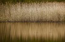 Am Wasser by Thomas Jäger
