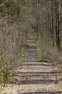 Waldweg im Frühling von Thomas Jäger