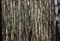 Wald im Frühjahr by Thomas Jäger