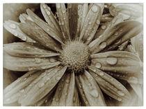 Flower - vintage von Peter Bergmann