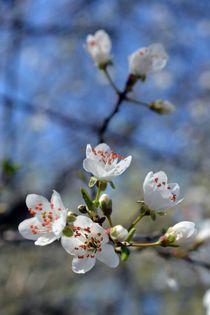 Frühlingserwachen by Bettina Schnittert
