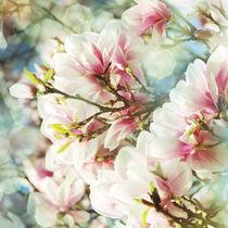 Magnolie by © Ivonne Wentzler