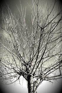 Tree vignette by Gordan Bakovic