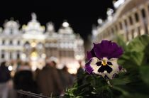Flower in Grand Place Brussels von Soraya Silva