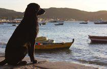 Dog von Soraya Silva