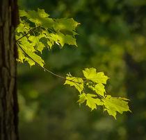 branch by Tim Seward